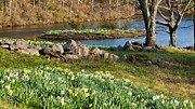 Connecticut Landscape Metal Prints - Spring Serenity Metal Print by Bill  Wakeley