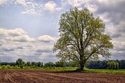 Agriculture Digital Art - Spring Shade Tree by Bill Tiepelman