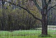 Kansas Art - Spring Shower by Fred Lassmann