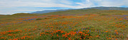 Carrizo Plain Prints - Spring Splendor Print by Lynn Bauer