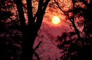 Wv Prints - Spring Sunrise through Trees Print by Thomas R Fletcher