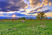 Horses In Art Prints - Spring Sunset Over The Rockies Print by Scott Mahon