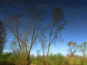 Scott Hovind - Spring Time Reflection