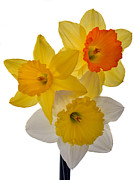 Floral Art Originals - Spring Trio by Terence Davis