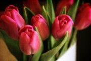 Tulips - Spring Tulips by Cathie Tyler