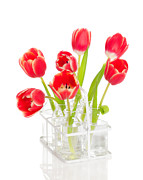 Crate Prints - Spring Tulips Print by Christopher and Amanda Elwell