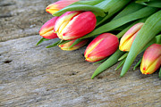Mothers Love Prints - Spring Tulips Print by Darren Fisher