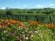 Poppies Field Digital Art - Spring view at Rusack Vineyards by Kurt Van Wagner