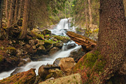 Mountain Stream Prints - Spring Waterfall Print by Evgeni Dinev