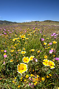 Farmland Posters - Spring Wildflowers 1 Poster by Peter Tellone