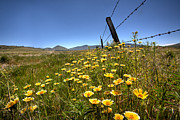 Barbed Wire Framed Prints - Spring Wildflowers 4 Framed Print by Peter Tellone