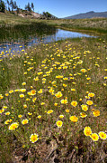 Yellow Flowers Photos - Spring Wildflowers and Stream 2 by Peter Tellone
