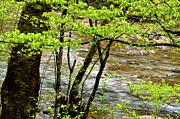 Williams Photos - Spring Williams River Scenic Backway by Thomas R Fletcher