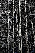 Ladnscape Metal Prints - Spring Woods Simulated Woodcut Metal Print by David Lane