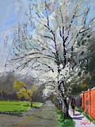 Ylli Haruni - Spring