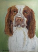 Dog Print Pastels Framed Prints - Springer Spaniel Framed Print by Joan Swanson