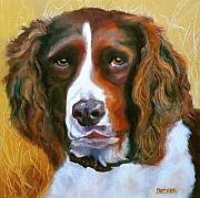 Oil Drawings - Springer Spaniel by Susan A Becker