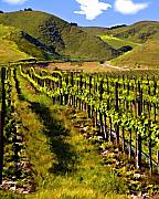 Vineyard Landscape Digital Art Prints - Springs Promise One Print by Patricia Stalter