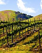 Vineyard Landscape Digital Art Prints - Springs Promise Two Print by Patricia Stalter