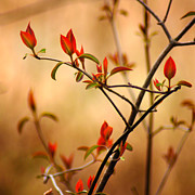 Red Leaves Photos - Springs Serenade by Bill Pevlor