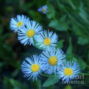 Sandra Bronstein - Springtime in Grand Teton