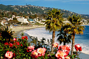 Beach Roses Prints - Springtime in Laguna Print by Cliff Wassmann