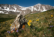 Colorado Mountains Posters - Springtime in the Rockies Poster by Joe Bonita