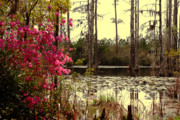 Tree Reflections In Water Prints - Springtime in the Swamp Print by Susanne Van Hulst