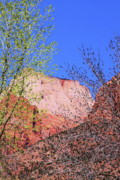 Virgin River Prints - Springtime in Zion Print by Viktor Savchenko