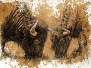 American Bison Drawings Prints - Springtime Nosh Print by Debra Jones