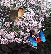 Lepidopterans - Springtime Serenade   by Eric Kempson