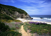 Dana Framed Prints - Springtime Trail  Dana Point Headlands Framed Print by Cliff Wassmann