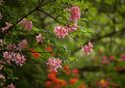 Rhodies Prints - Sprinkled Amongst Print by Mike Reid