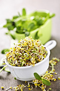 Broccoli Photo Prints - Sprouts in cups Print by Elena Elisseeva