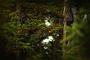 Forest Prints - Spruce with a touch of red Print by Scott Hovind