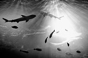 Underwater Art - Squales Fish by Xamah Image