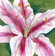 Print Of Paintings - Square White and Pink Lily by Cherilynn Wood