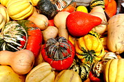 Food Art - Squash and Gourds by Tanya  Searcy