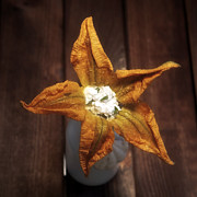 Raw Photos - Squash Blossom by Joana Kruse