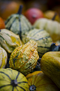 Consumes Prints - Squashes at the Market Print by Heather Applegate
