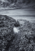Tidepool Framed Prints - Squeezing Through every Crack Framed Print by Mike  Dawson