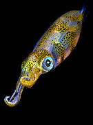 Squid Photos - Squid at night by Rico Besserdich