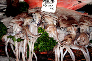 Squid Photos - Squid for Sale by Heather Applegate
