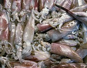 Squid Photos - Squid On Sale At A Fish Market by Tony Craddock