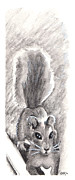 Monotone Drawings Prints - Squirrel Print by Beth Kreutz