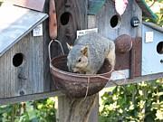 Patricia Barmatz - Squirrel Feeding