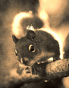 Janeen Wassink Searles Framed Prints - Squirrel in Sepia Framed Print by Janeen Wassink Searles