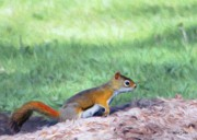 Squirrel Digital Art Metal Prints - Squirrel in the Park Metal Print by Jeff Kolker