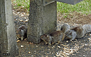 Squirrel Digital Art Metal Prints - Squirrel Peanut Party Metal Print by Methune Hively