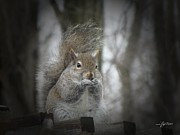 Snack Time Prints - Squirrel Snack Time 2065 Print by Maciej Froncisz